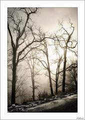De los nervios (V- strom) Tags: niebla nieve árbol tree cielo sky fog monocromo texturas textures invierno winter frío cold nikon nikon2470 nikond700 viaje travel luz light vstrom concepto concept contraluz backlighting bosque forest sol sun