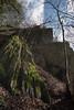 Wald- Luminale-bw_20180324_5786.jpg (Barbara Walzer) Tags: 240318 frühlingswald königsteinimtaunus licht luminale wald