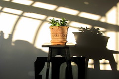 Flowerpot and shadow (Nevio Presotto) Tags: centerpiece balcony vase pottedplant flowerpot flowerarrangement pergola tealight window shadows stilllife