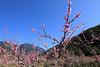 (Eddy_TW) Tags: 台灣 taiwan 台中市 taichung 武陵農場 武陵 wuling wulingfarm 桃花 桃