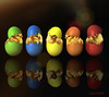Easter Chick Pageant (clabudak) Tags: born broke broken brown chicken concept crack cracked easter eating egg eggshell food isolated life live metaphor newborn object seasonal shell spring eggs five colorful color blue green yellow orange led japan