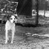 Rumor10Mar2018113-Edit.jpg (fredstrobel) Tags: dogs pawsatanta phototype atlanta blackandwhite usa animals ga pets places pawsdogs decatur georgia unitedstates us