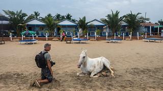 Mise en scene    ... Nick and Agonda's white horse