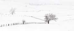 Helter Skelter (nrg_crisis) Tags: snow snowstorm tree fence outdoors farm shenandoahvalley virginia