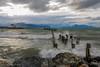 viento patagonico (Homayra Oyarce G.) Tags: puertonatales senodeultimaesperanza canalseñoret muelle muellebraunblanchard regióndemagallanesylaantárticachilena patagonia paisajes viento