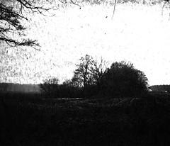 In the shadow (Rosenthal Photography) Tags: washiw25 ff120 landschaft tetenaleukobrom1120°c3min bnw schwarzweiss anderlingen mamiya7 bäume 6x7 pflanzen mittelformat städte winter bw februar 20180206 analog asa25 dörfer siedlungen landscape mood february nature dark darkness mediumformat blackandwhite contrast endofdays daysofdarkness mamiya 80mm f4 washi washiw 6asa tetenal eukobrom 11 epson v800 shadow