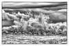 B&W ... waves ... (manuela albanese) Tags: genova genoa liguria sea alone mediterranean mare mindfulness manuela albanese photo canon relax tigullio acqua cielo oceano spiaggia sabbia paesaggio winter città barca baia torre storm tempesta wind vento onda