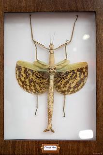 Insecte, Québec, Canada - 5065