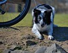 Tethered Doggie (Scott 97006) Tags: dog cute animal canine waiting alert watching face expression eyes