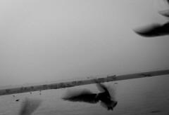 Ganga | Varanasi 2017. (Vijayaraj PS) Tags: nikon varanasi kasi india heritage hindu hinduism ganga ganges water river incredibleindia light outdoor ghats asia travel boat bird seagull seagulls migration blackandwhite monochrome people white background grey grains