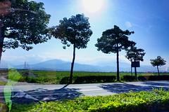 Taitung (qqazwws18) Tags: sonya6000 sony nature road tree travel taiwan taitung