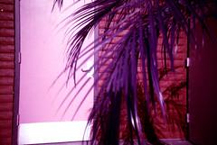 penthouse 1. (shoegazer.) Tags: lomo lca lomochrome purple analog film photography california losgatos 2017 hike nature outdoors palmtree frond door building bricks architecture detail