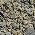 Bits of Tentaculites in the rubble thumbnail