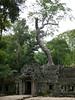 Tree Top Garden (Toats Master) Tags: angkorwat cambodia nature ruins temples trees roots history jungle