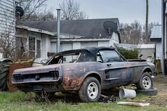 Mustang, Eastern Shore Delaware (adamkmyers) Tags: mustang delaware delmarva easternshore abandoned abandonedcar rusty crusty