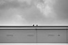 Berlin, Barther Straße - Dach (tom-schulz) Tags: nx300 monochrom rawtherapee bw sw berlin thomasschulz haus vögel vogel dach wolken himmel