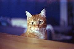 film (La fille renne) Tags: film analog 35mm lafillerenne home canonae1program 50mmf18 cinestill cinestill800t tungsten grain cat blue