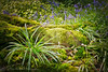 Still Waiting. (Dave Hilditch Photography) Tags: essex nature texture moss plants bluebells spring