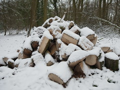 R1039759 (Stitchinscience) Tags: snow oxfordshire pile wood woodpile
