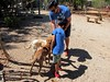 03-24-18 Dog Days 02 (Leo & Gil) (derek.kolb) Tags: mexico yucatan uman family