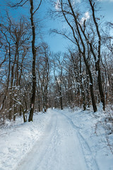 IMG_01457 (maro310) Tags: 2018 365project 70d budapest canon csilleberc hungary magyarorszag blue city colours erdo forest hiking ho kertvaros kulvaros landscape nature offbeatentrack outdoor sky snow suburb tel termeszet trail tree urban winter woods