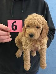 3-11 Gracie Girl 6_Pic 2