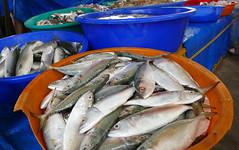 Fresh Fish P1250654 (Phil @ Delfryn Design) Tags: india2018 kochi