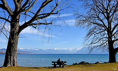 Un peu de douceur (Diegojack) Tags: saintsulpice vaud suisse paysages léman lac banc personnage plage pélican douceur d7200