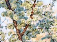 Spring (Jon Ariel) Tags: statebotanicalgardensofgeorgia athens georgia ga northgeorgia spring flowers trees