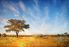 Fence In The Grass... (Daniela 59) Tags: fence fencefriday tree camelthorntree sky clouds landscape grass nature outdoor namibia 7dwf saturdaythemelandscapesoutsidepictures danielaruppel workingwithtextures