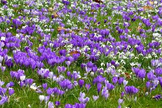 Flower Carpet