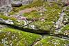 Moss and Boulder (esywlkr) Tags: rock boulder moss naturebrp nc wnc blueridgeparkway northcarolina
