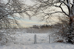 HFF (w.mekwi photography [here & there]) Tags: morning lanarkshire landscape winter trees nature hff fencefriday icy snowy fence ice scotland snow