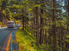The winding highway en route Kullu with the dense forest beside (The Impulsive Photographer) Tags: travel travelphotography himachalpradesh india sony cybershot roadtrip forest jungle green highway road landscape landscapephotography scenic beauty view hillstation nature trees kullu