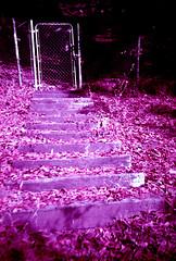 the gate. (shoegazer.) Tags: lomo lca lomochrome purple analog film photography california losgatos 2017 hike nature outdoors steps gate light shadows