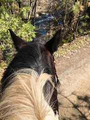 Nice ride along the creek today (♞Jenny♞) Tags: pete ride creek jennygrimm