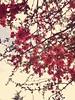 Up & up (Furkan Ozcelik) Tags: tree pink flower spring pembe ağaç bahar ilkbahar çiçek