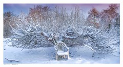 Magic apple tree on my allotment, Eynsford, Kent, last week. (Richard Murrin Art) Tags: magicappletreeonmyallotment eynsford kent lastweek snow tree outdoors richard murrin art photography canon 5d landscape travel images building cool