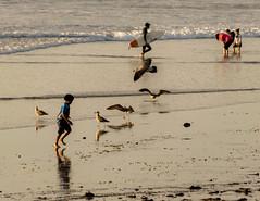 Playful (matthew:D) Tags: california sand child surfer birds beach water family evening play ocean