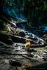 Dog near a waterfalls (YL168) Tags: dog sony a6000 doginthewoods sonyflickraward sunbeam sun light yearofdog