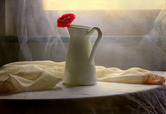 Red Rose with Morning Glow ... (MargoLuc) Tags: red rose flower light window backlight soft shadows stilllife white jug