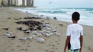 20180203_09 Seagulls Terns Black Skimmers Singer Island Riviera Beach FL USA