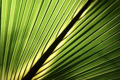 Palmetto #3 (MJ Harbey) Tags: lines green shadows palmetto florida usa apollobeach apollobeachflorida nikon d3300 nikond3300 canaveralnationalseashore macro