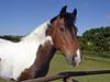 ZebJune05 021 (Zebsgirl) Tags: zeb 2005