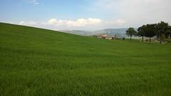 Basilicata, Italy (maramillo) Tags: green landscape scape italy italien rural maramillo otr cy friendlychallenges