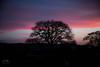 A Shropshire Sunset (John R Woodward Photography) Tags: shropshire sky skyclouds sunset nature mothernature canon canondslr canoneos canonllenses canon5dmarkiv llenses