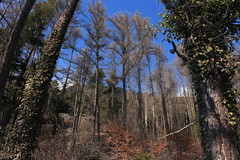 forêt (bulbocode909) Tags: valais suisse forêts arbres montagnes nature hiver bleu troncs vert orange