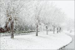 winter (heavenuphere) Tags: netherlands nederland europe zuidholland southholland albrandswaard poortugaal landscape nature winter december walk freezing cold snow snowing trees 24105mm