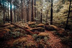 Waldlandschaften (Gruenewiese86) Tags: 6d canon harz landschaft steinernerenne tamron wasserfälle wernigerode landscape natur steinerne renne wald wälder wandern waldlandschaft forest forestscape orange teal holz baum erde