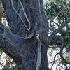 IMG_0108 (peterhut (Muirland Publishing)) Tags: photochallenge treetrunks